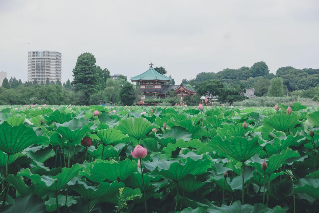 Parc-Ueno-Tokyo-06